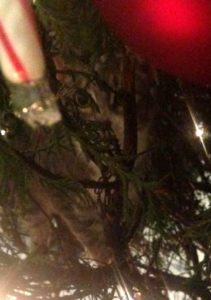Cat hiding in the Christmas tree.